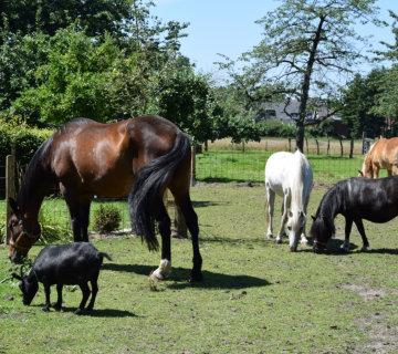 Ferienhof Roehsmann Badbergen - Tiere